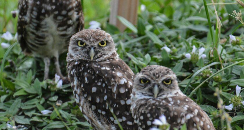 Owl Pellets 101: Investigating Ecosystems (Gr2-8)