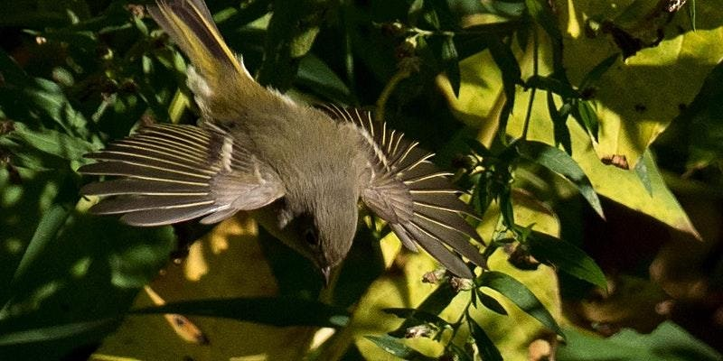 A Bird Walk in Central Park: Come enjoy the fall migration!