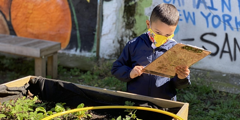 Outdoor Learning for NYC Schools (K-12) (Virtual Workshop)