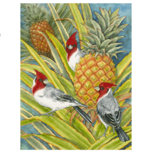 Brazilian Cardinals in the Pineapple Patch Giclée