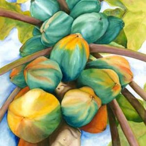 Papayas Nancy Forbes