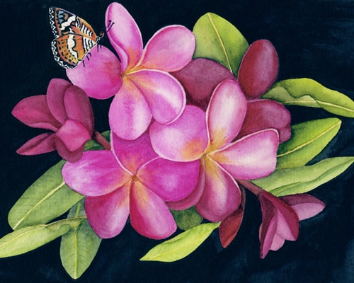 Pink Plumeria with Butterfly Print Nancy Forbes