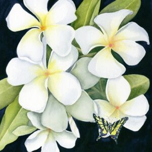 White Plumeria with Butterfly Print Nancy Forbes