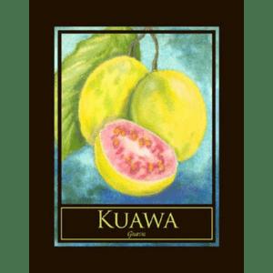 Kuawa (Guava) Print