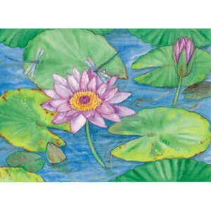 Waterlilies & Dragonflies Print