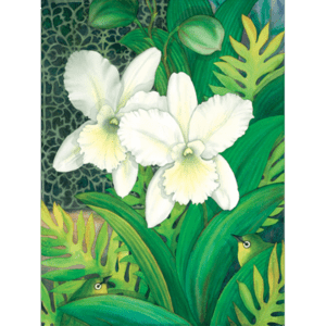 White Orchids & White Eyes Print