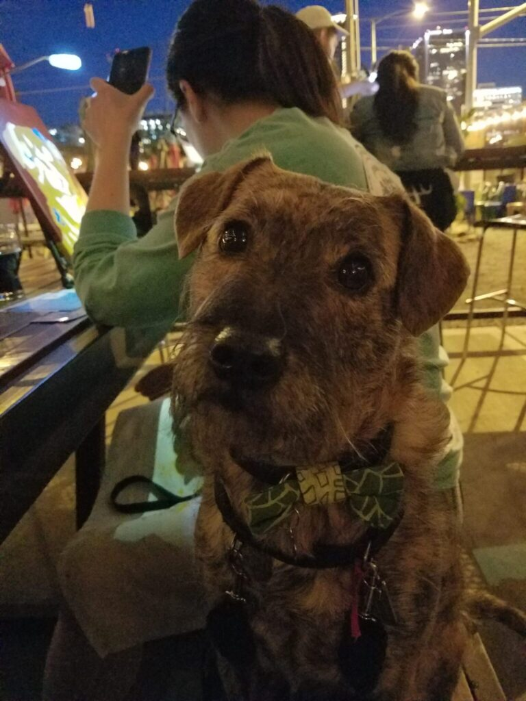 (Wo)Man's Best Friend: The Best Places  Take Your Dog in Kansas City