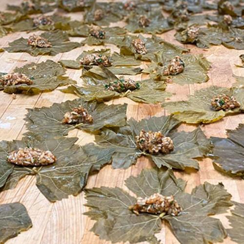 grape leaves-02