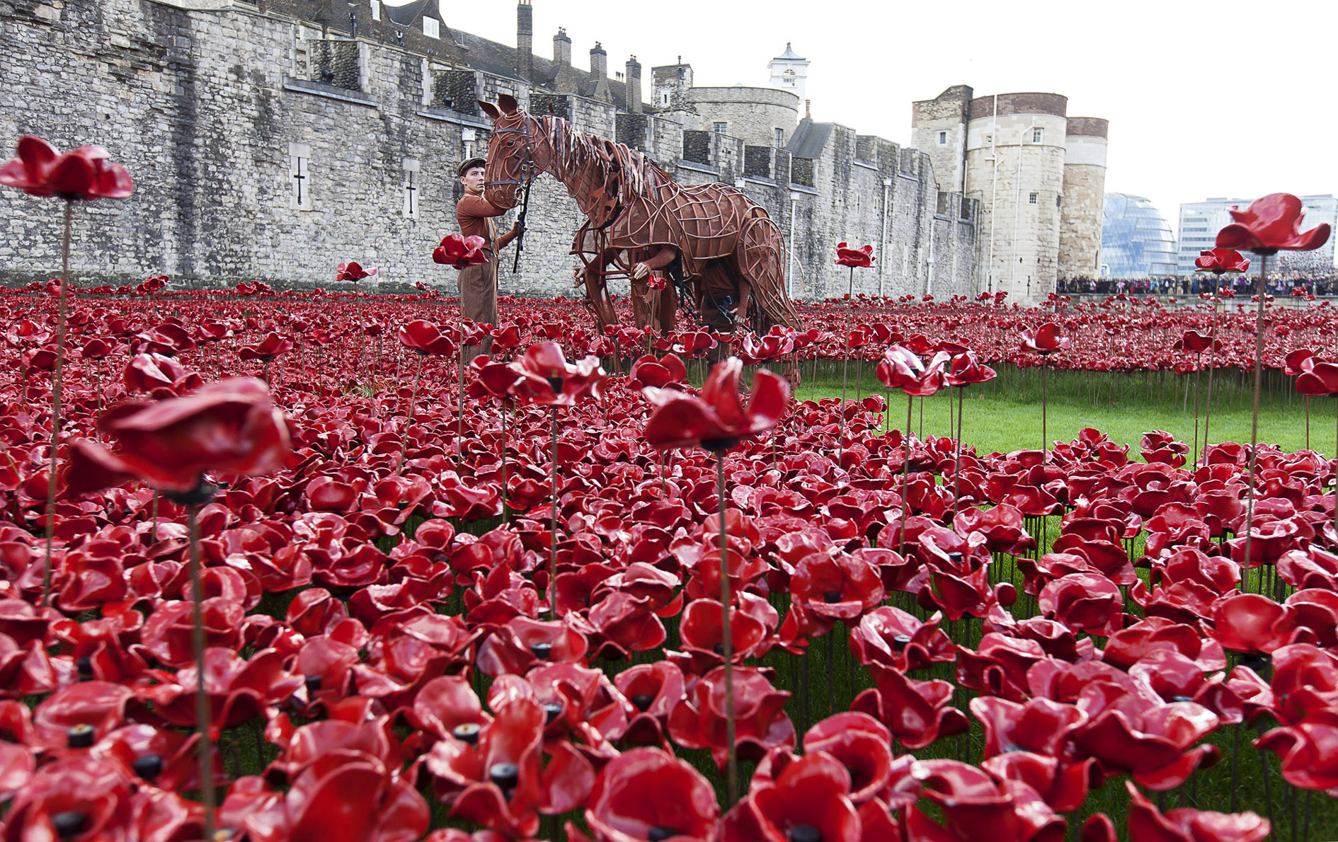 "War Horse Joey visits the poppy installtion, ""Blood swept lands and seas of red"" at the Tower of London with writer Michael Morpurgo"