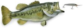 Grand Haven Charter Fishing