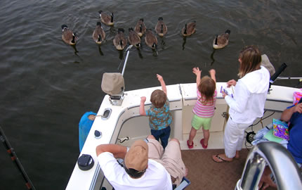Greeting The Ducks