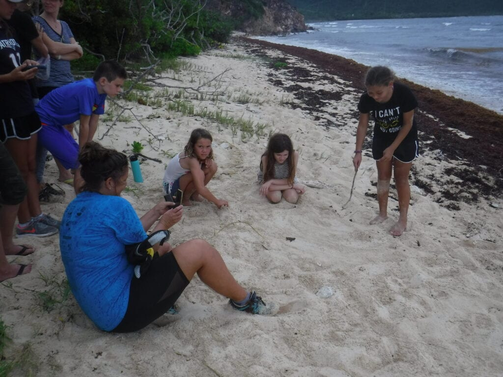 A group of children watching a baby sea turtle