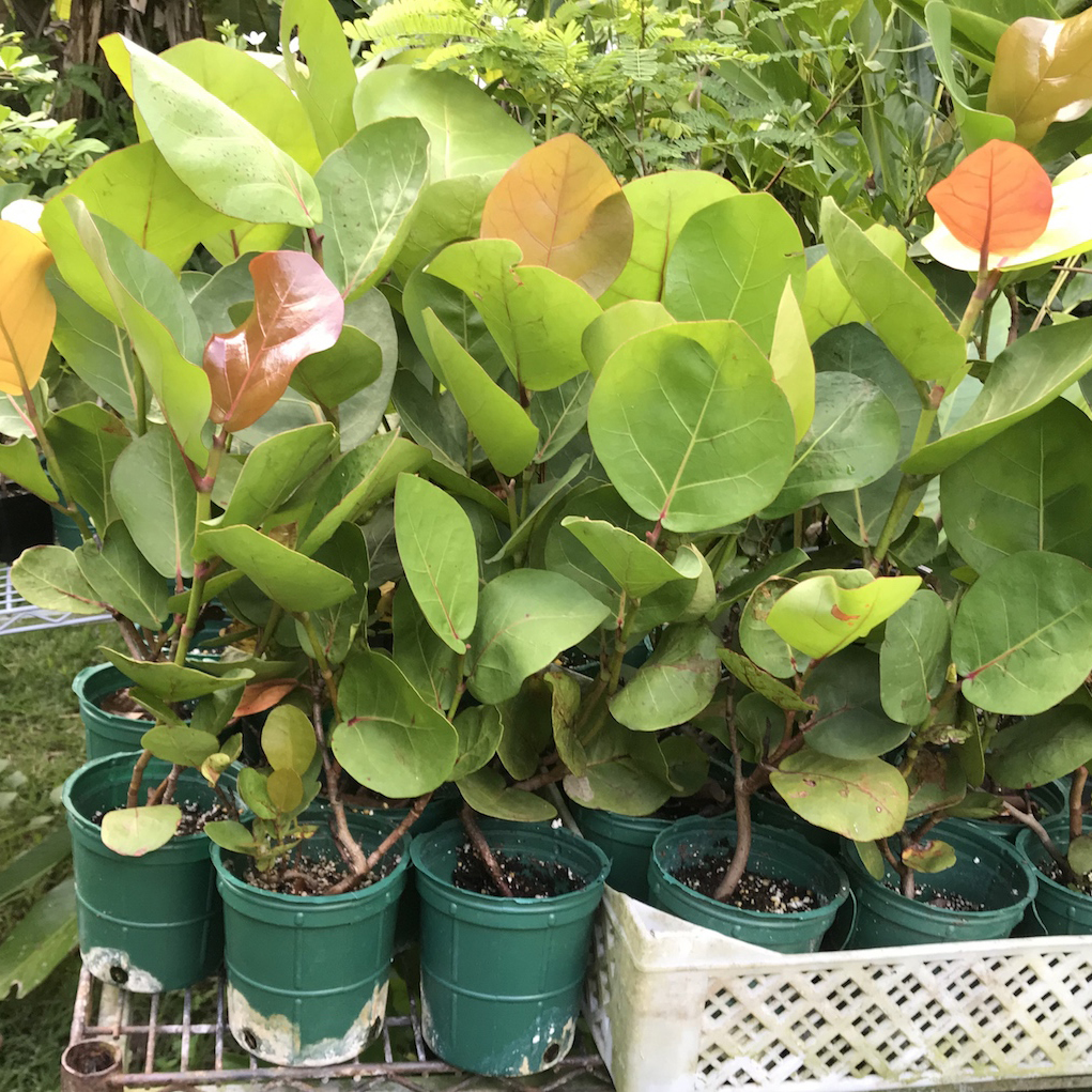 plants_4830_sq