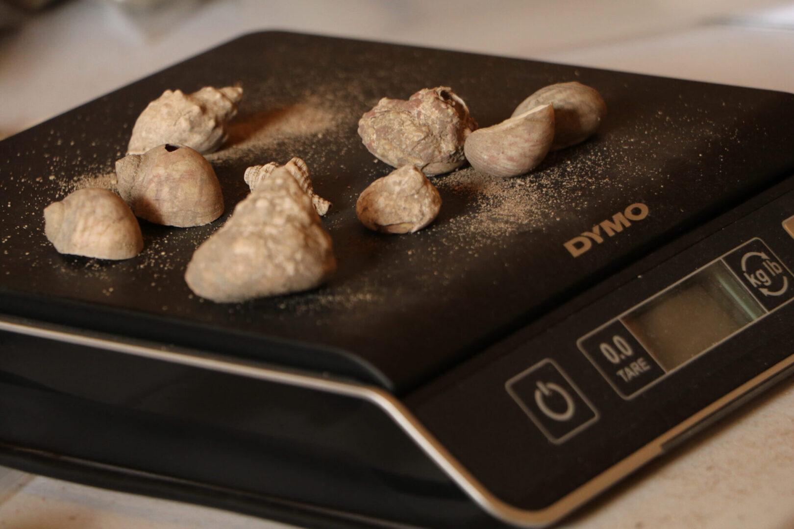 Shells on a weighing scale