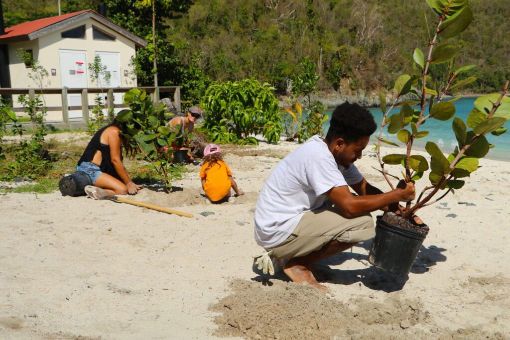 A group of people planting new saplings by the beach