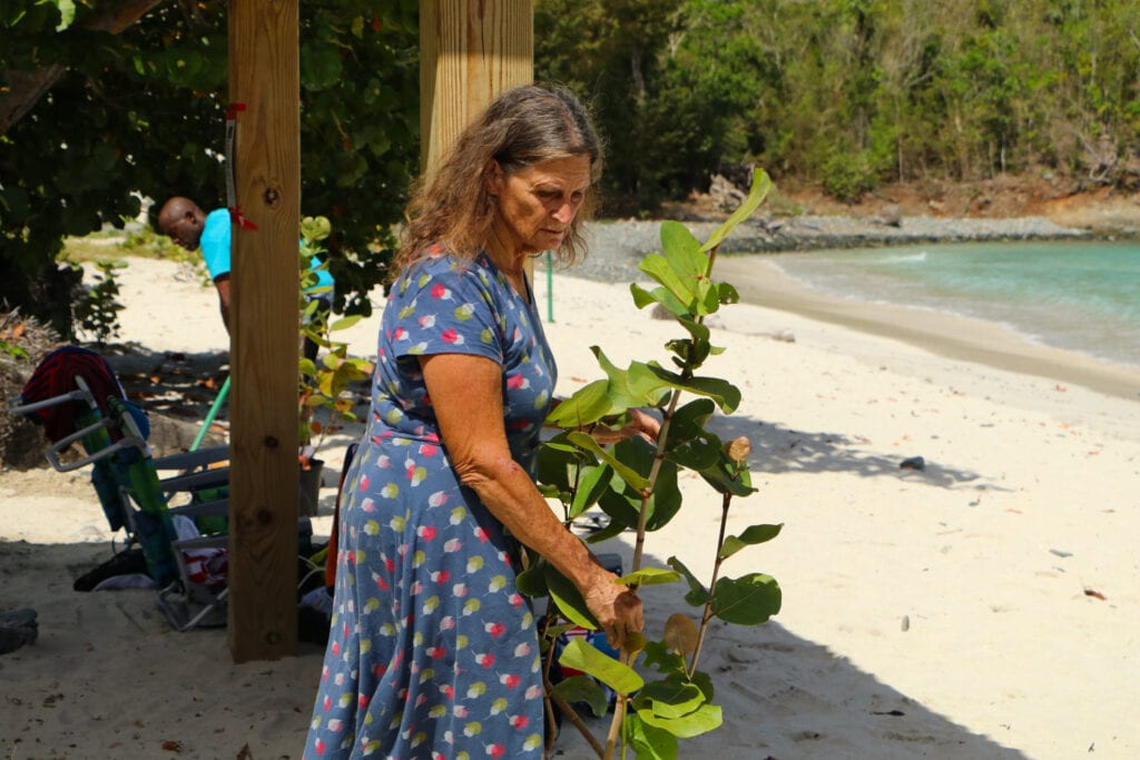 An old woman about to plant a sapling