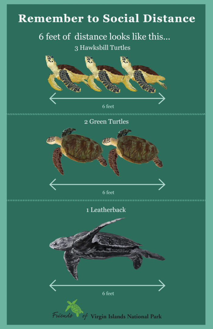 All the turtles poster Edited