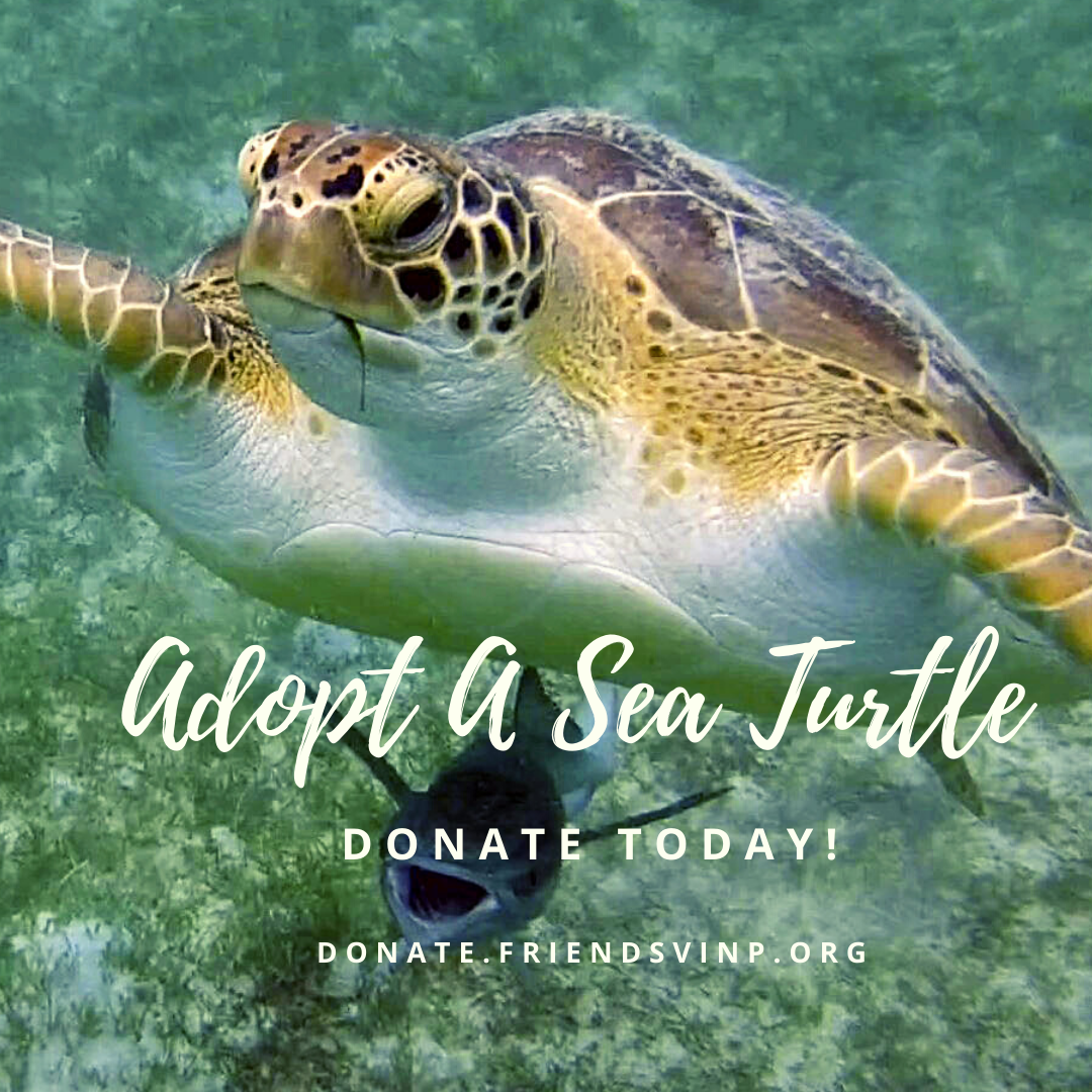 adopt a sea turtle instagram (1)
