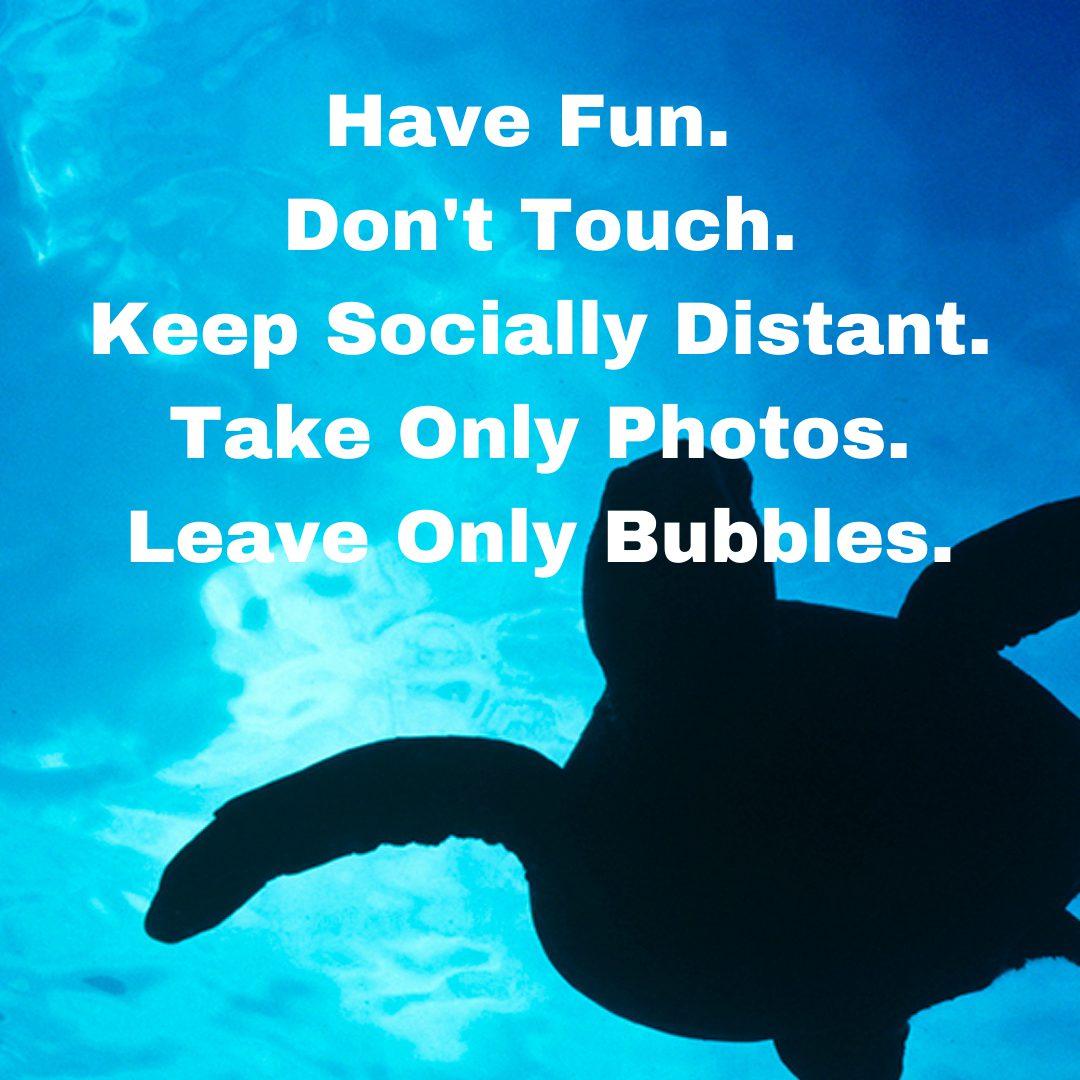 turtle etiquette