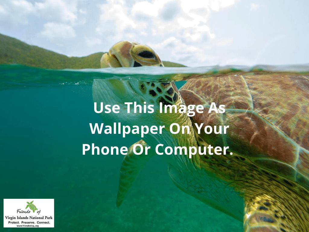 Turtle Wallpaper Tablet 1024x768
