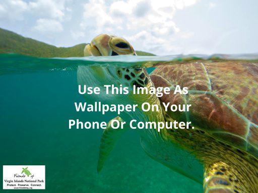 Turtle-Wallpaper-Tablet-1024x768-1