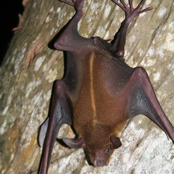 bat4_sq
