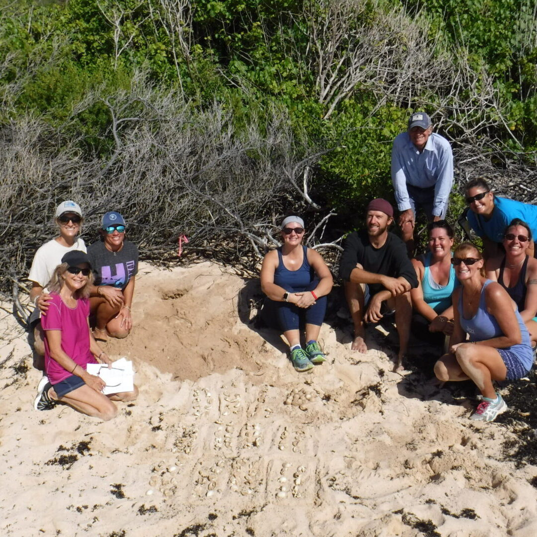a group of people near a turtle nest