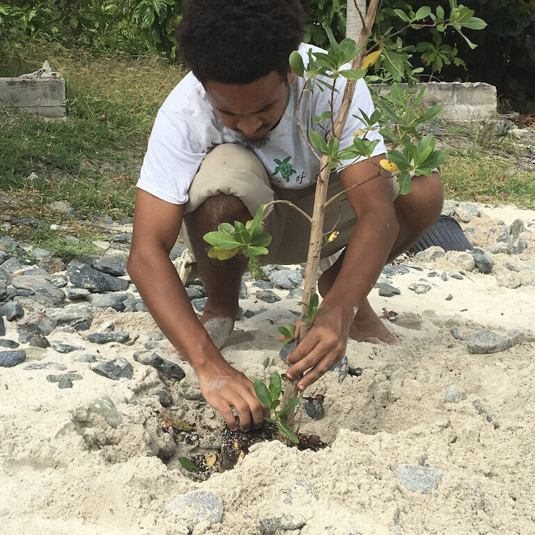 square planting
