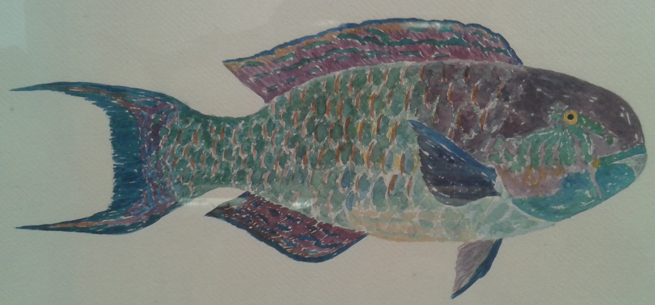 Fish paintings of Jean Baissac