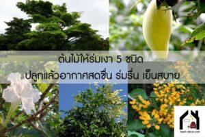 ต้นไม้ให้ร่มเงา 5 ชนิด ปลูกแล้วอากาศสดชื่น ร่มรื่น เย็นสบาย #ของแต่งบ้าน