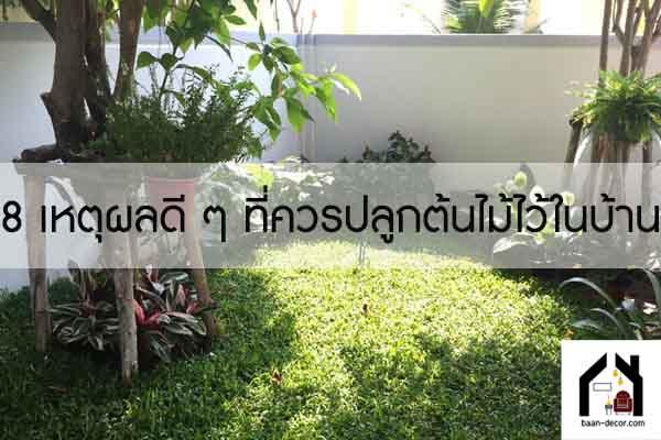 8 เหตุผลดี ๆ ที่ควรปลูกต้นไม้ไว้ในบ้าน #บ้านและสวน