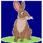 rabbit 210x190