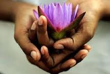 thankful lotus