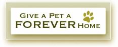 ro_adopt_pet