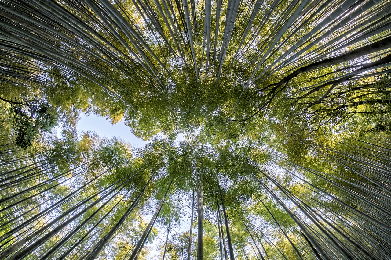 Investing is like growing a Chinese bamboo tree..!!