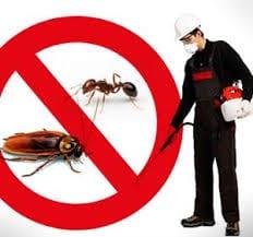 شركة مكافحة حشرات بخيبر