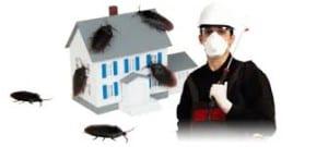 شركة مكافحة الحشرات بمهد الدهب
