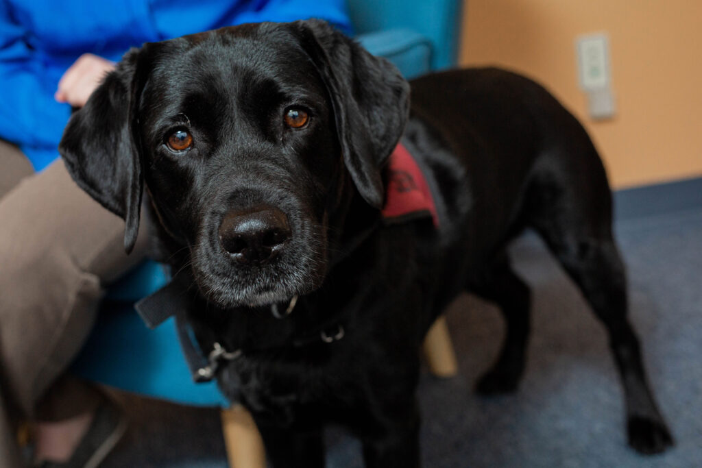 courage health and wellness service dogs riggs