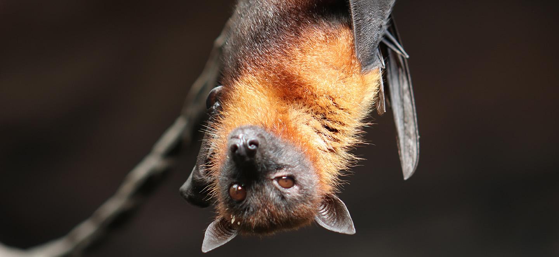Spartanburg SC bat removal J&N Pest Control