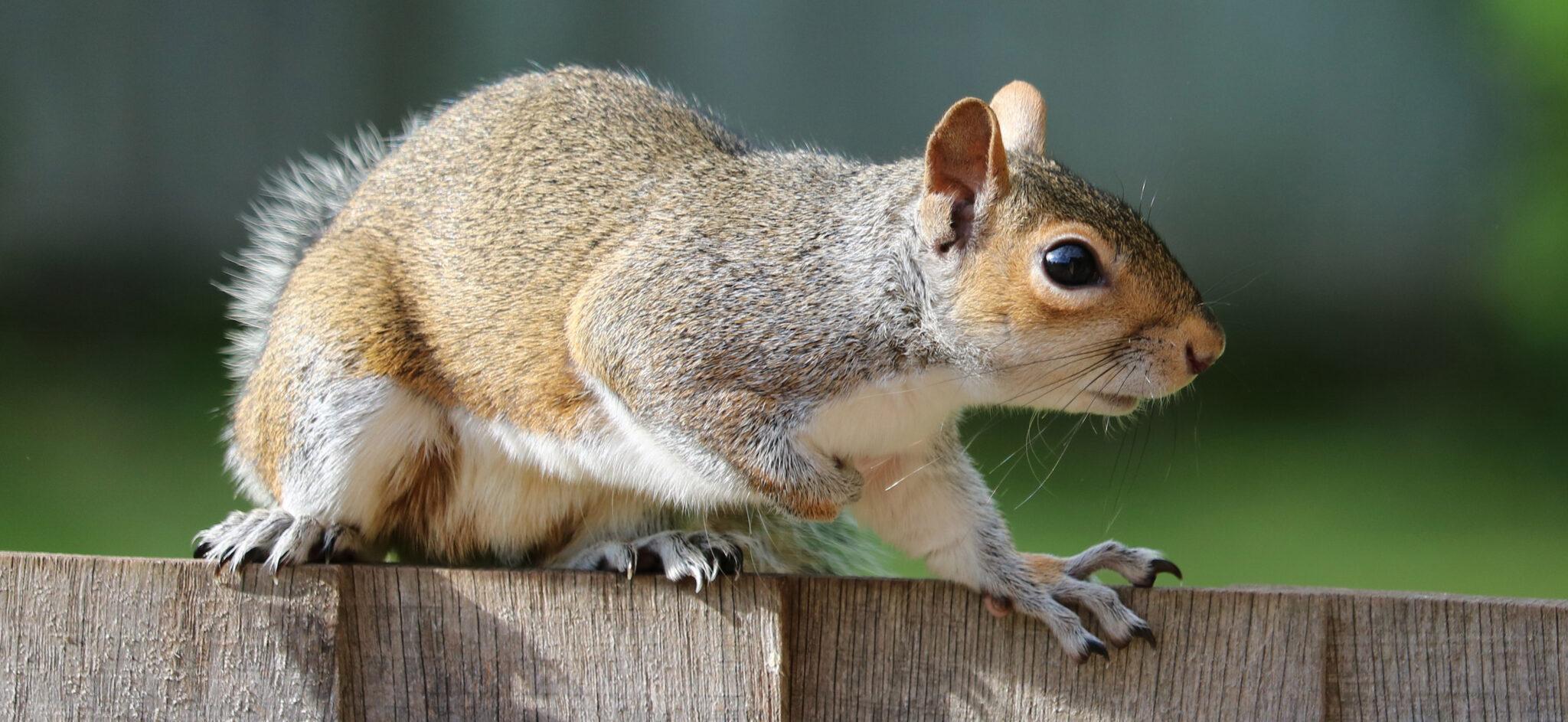 Spartanburg SC wildlife removal J&N Pest Control