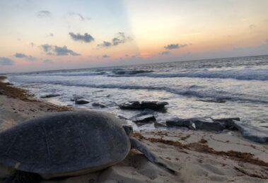 Foto: Dirección de Turismo y Desarrollo Económico de Cozumel