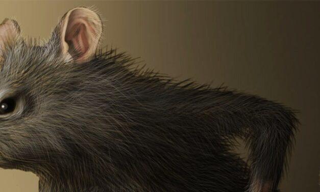 Parindo Um Rato – Sérgio C. Buarque