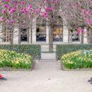Paris: expectativas de primavera – Fernando Dourado