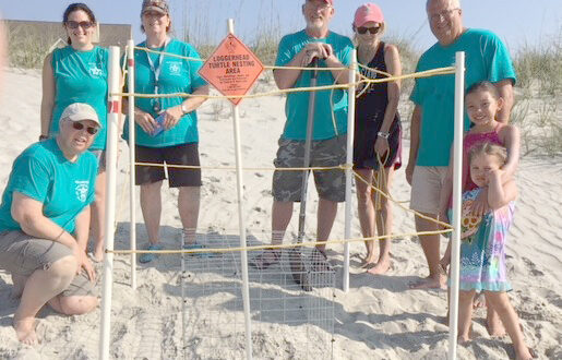 Sea turtles nesting season begins in North Myrtle Beach