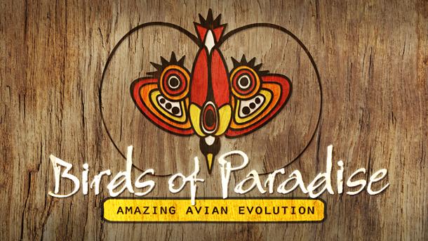 birds of paradise 610x343_crop_upscale_q85