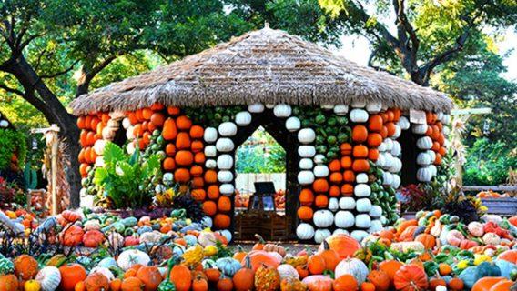 Dallas arboretum pumpkin patch