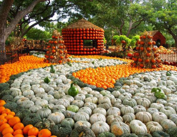 Arboretum Fall Festival pumpkins