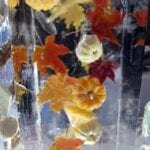 Fall Leaves and pumkins in ice