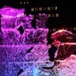 ice flora and mantay ray
