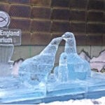 fur seals boston aquarium ice sculpture